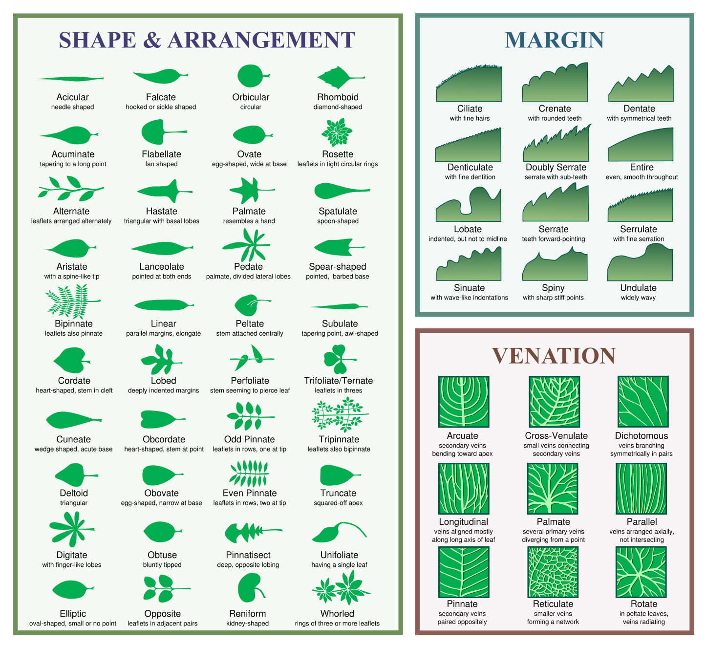 leaf_morphology.png